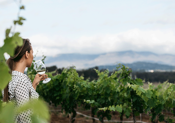 lady drinking white wine in the vineyard